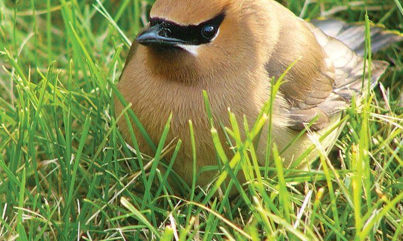 birdscaping ftimg