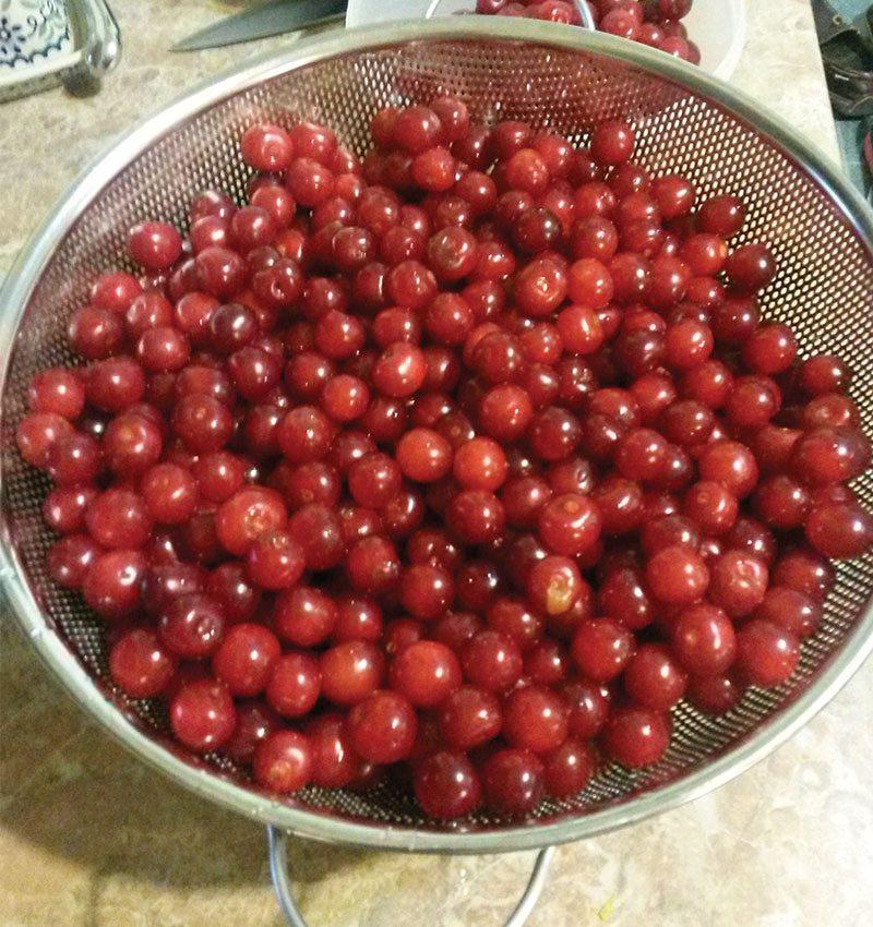 cherry pits of july ftimg