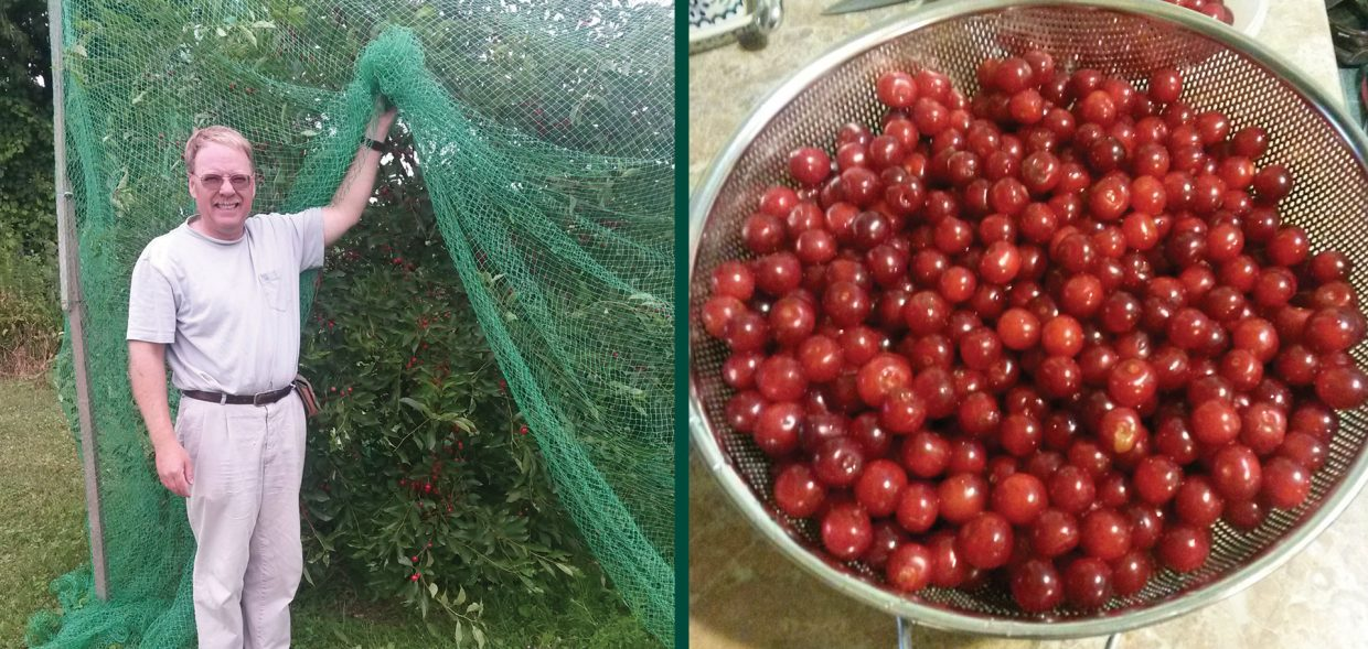 cherry pits of july