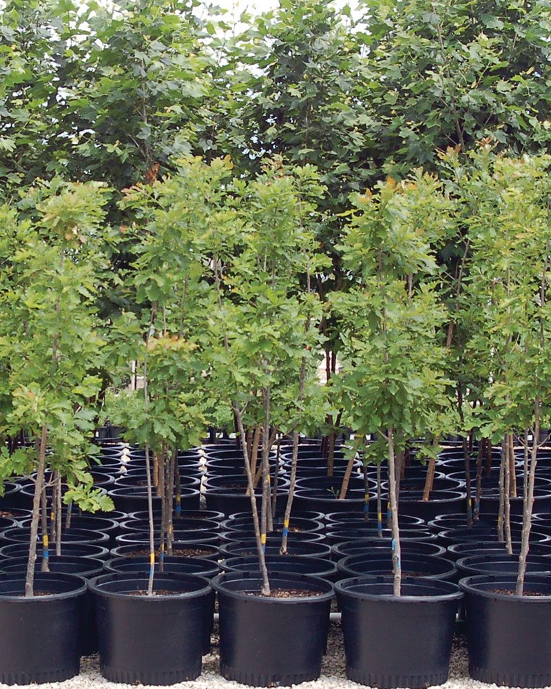 container grown trees ftimg