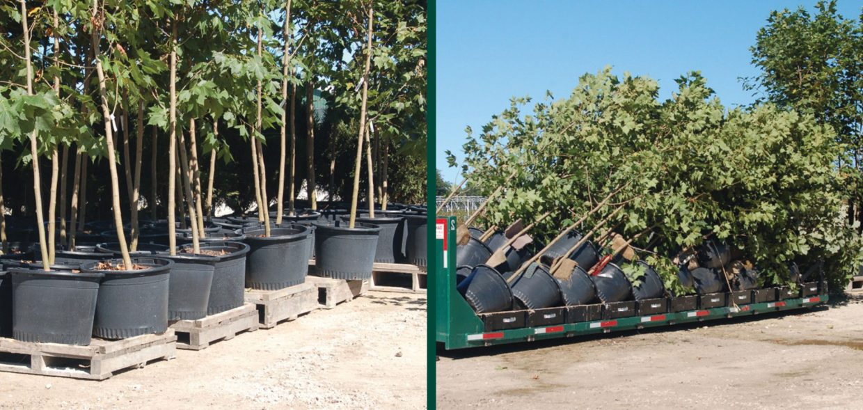 container grown trees shipping