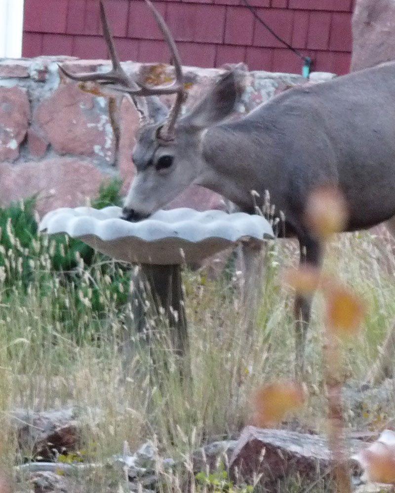 deer resistant plants ftimg