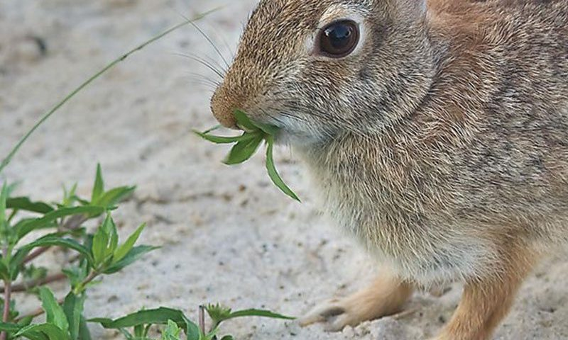 rabbit resistant perennials ftimg