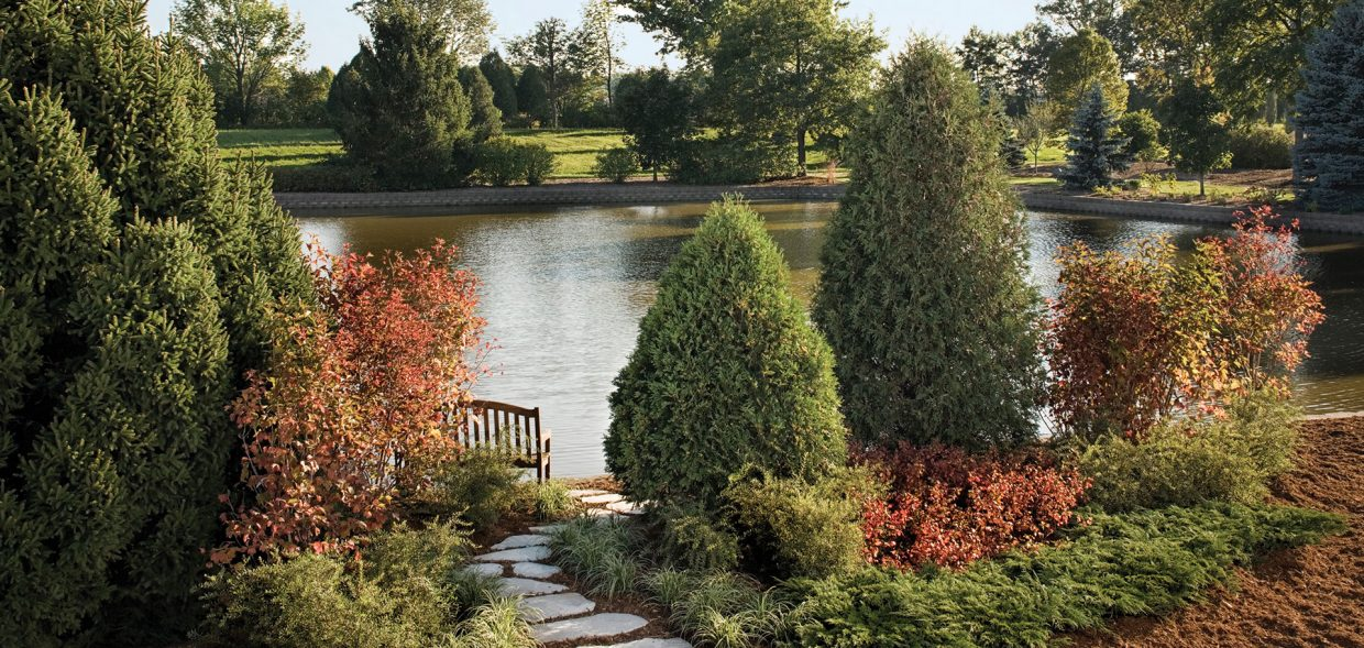 technito arborvitae thuja occidentalis bail john landscape