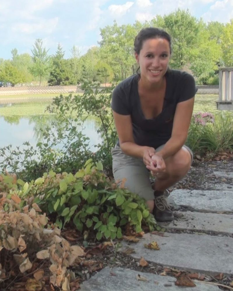 water plants watering plants ftimg