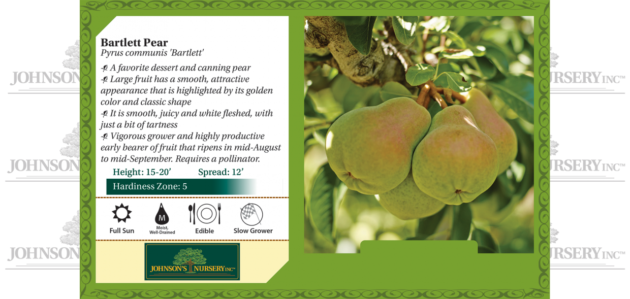 bartlett pear pyrus communis benchcard