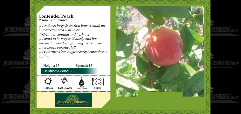 contender peach prunus persica benchcard