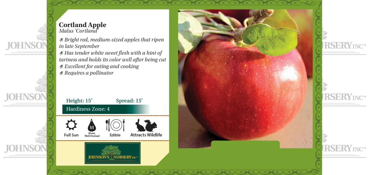 cortland apple malus domestica benchcard