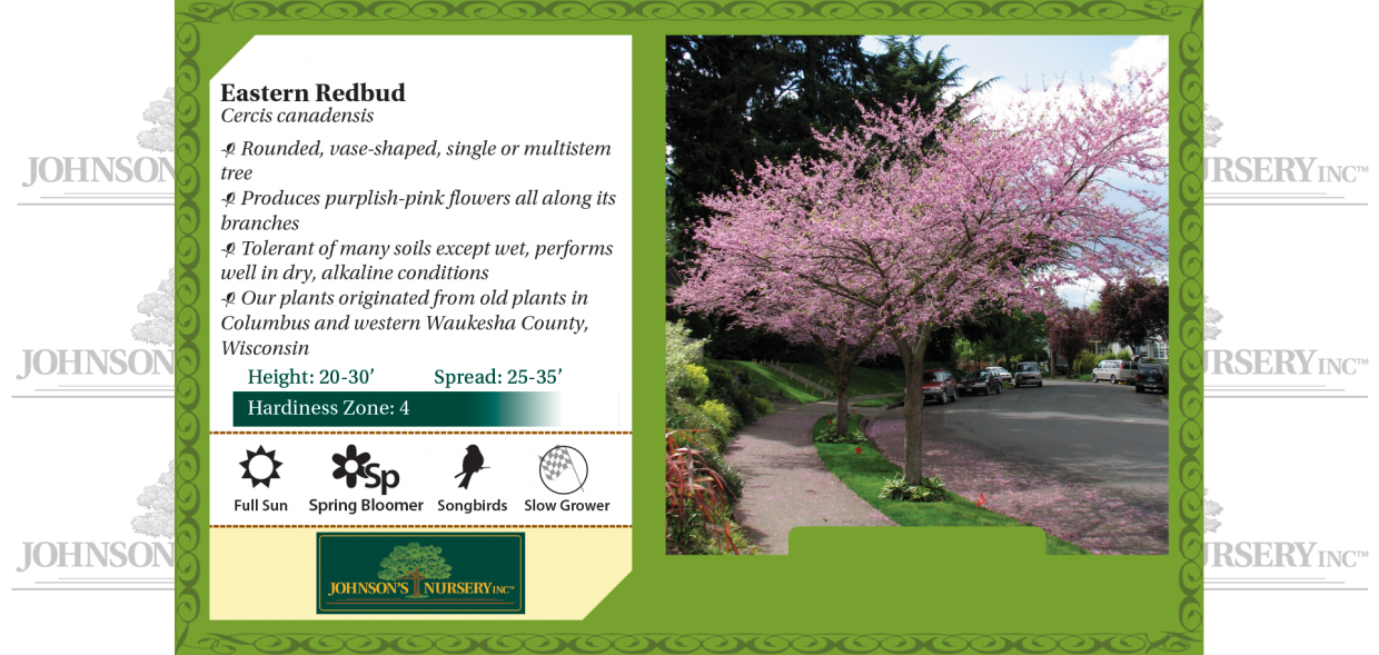 eastern redbud cercis canadensis benchcard