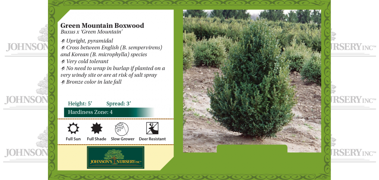 green mountain boxwood buxus benchcard