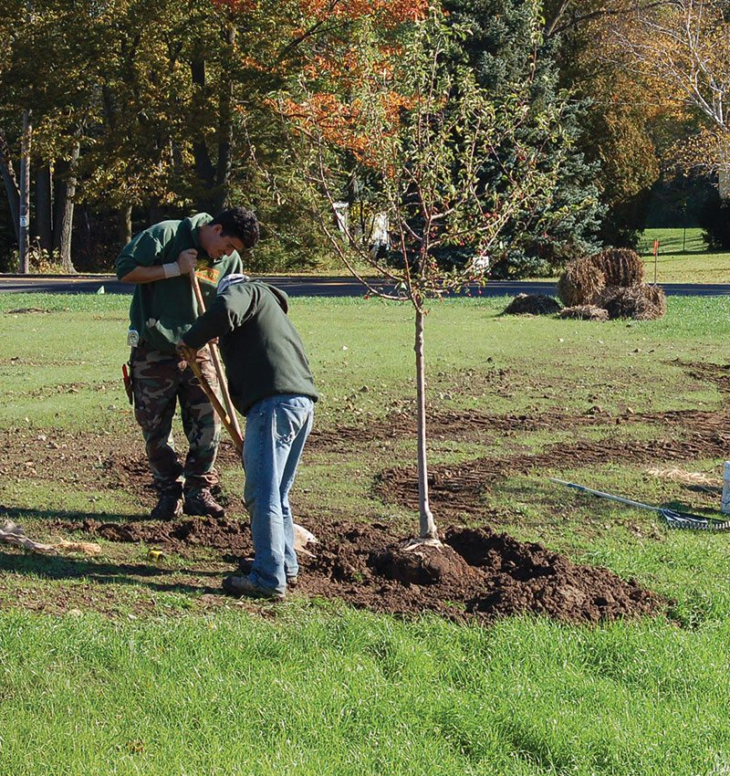 planting trees johnsons nursery ftimg