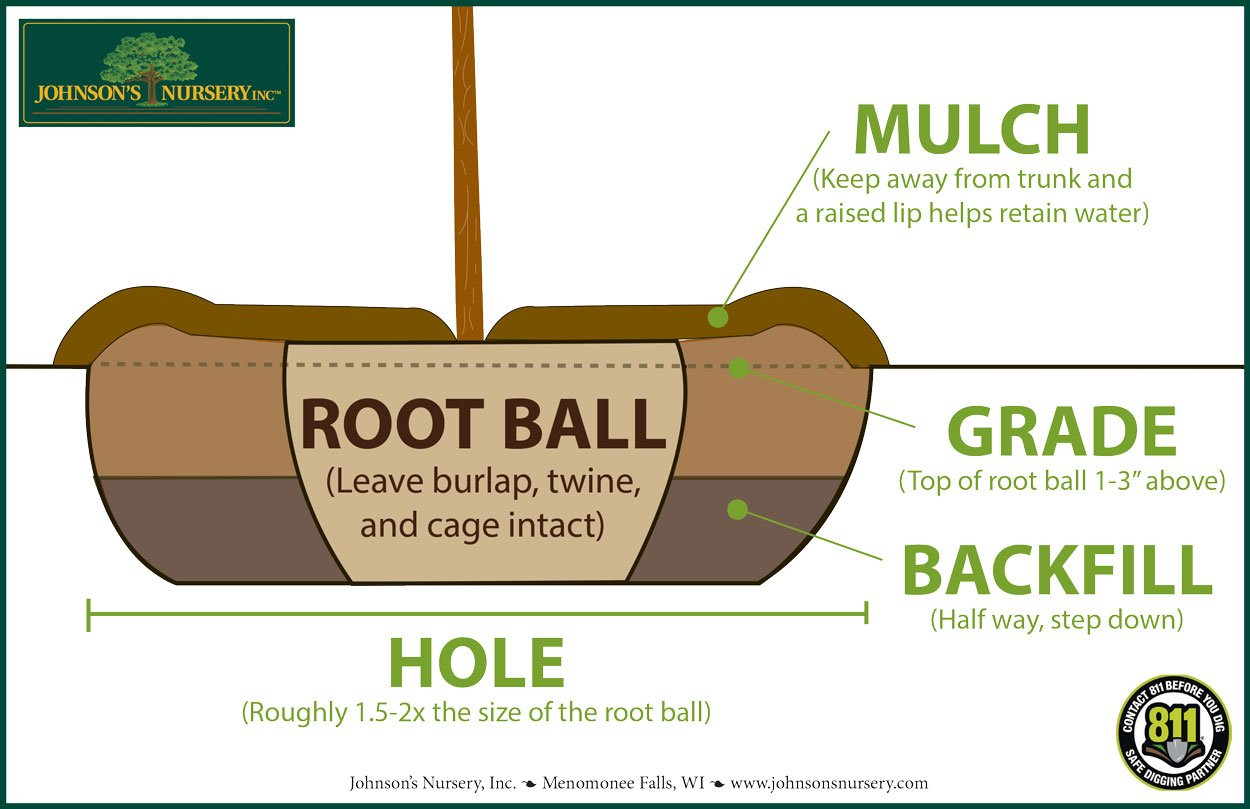 planting trees johnsons nursery dig hole diagram