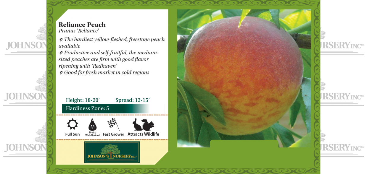 reliance peach prunus persica benchcard