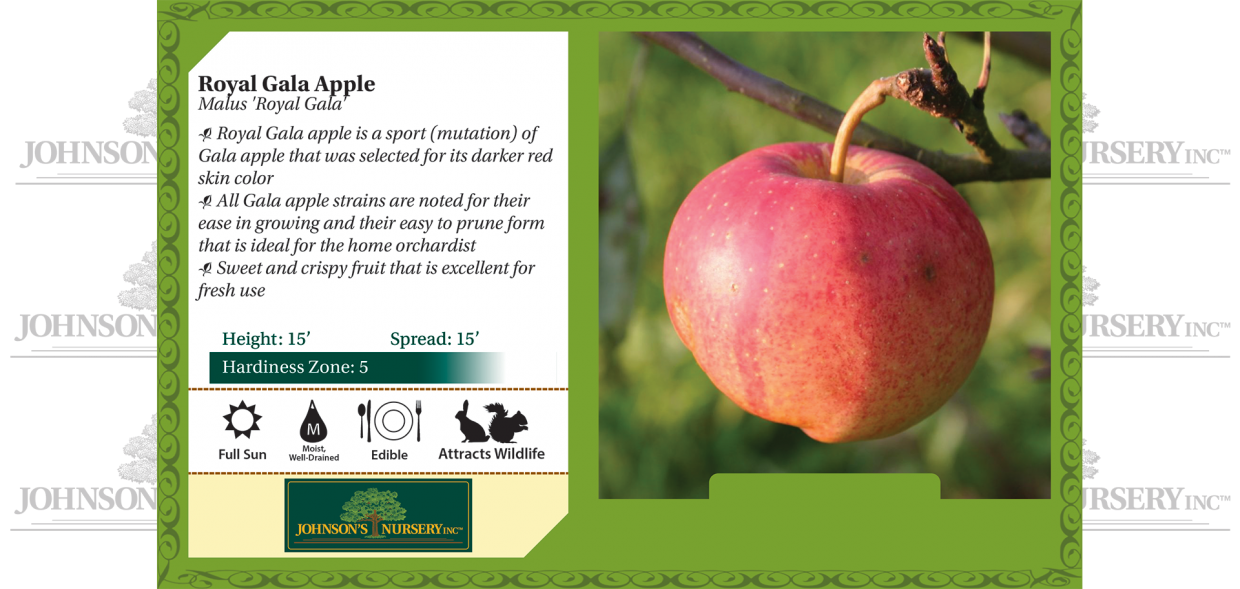 royal gala apple malus domestica benchcard