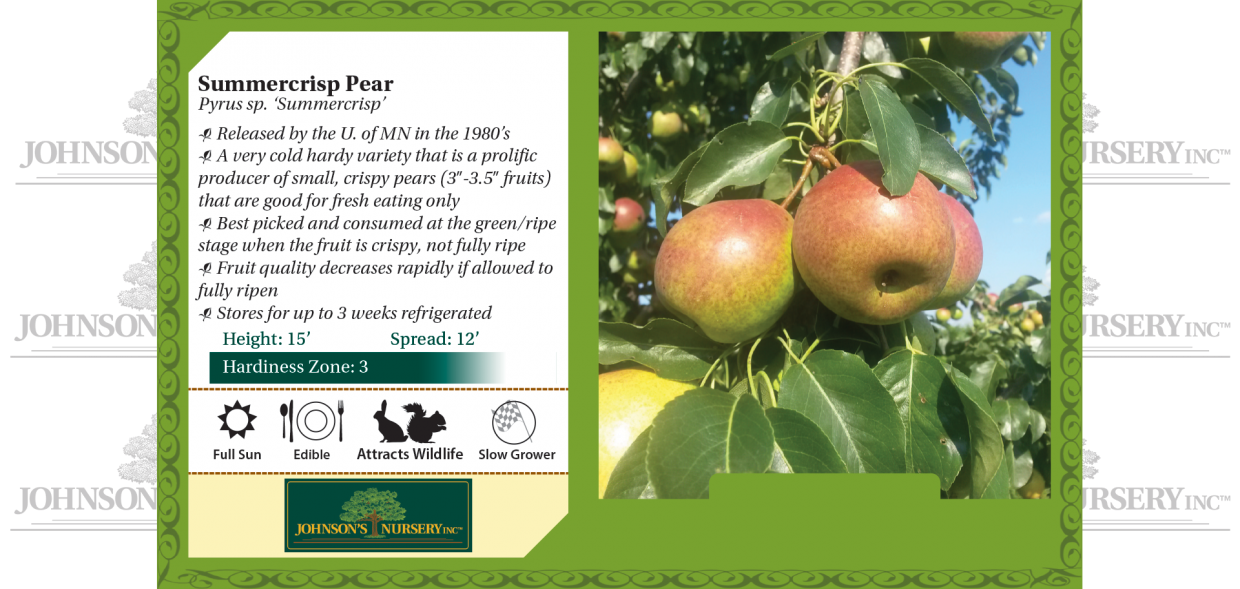summercrisp pear pyrus benchcard