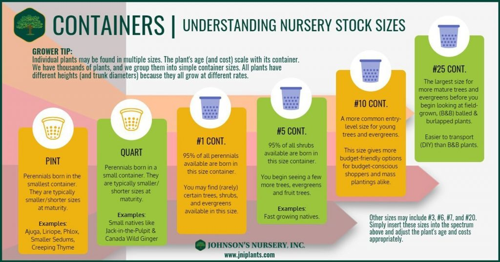 understanding nursery stock sizes container infographic