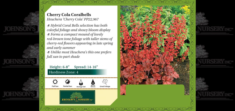 cherry cola coralbells coral bells heuchera benchcard