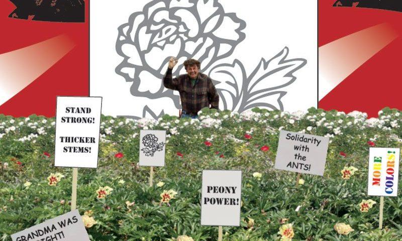 peony revolution peonies plant talk michael yanny ftimg