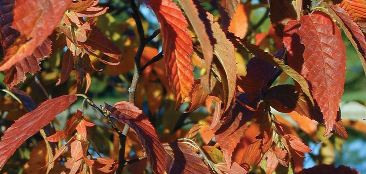 tree cycles plant production stages seed picking fall color