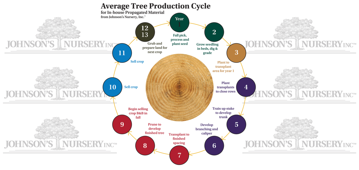 Tree Cycles Stages Of Production Knowledgebase