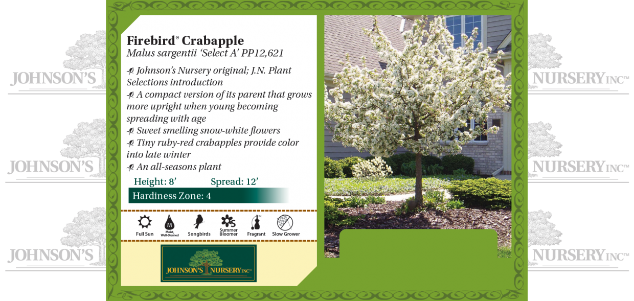 Firebird® Crabapple Malus sargentii 'Select A' PP12,621 benchcard