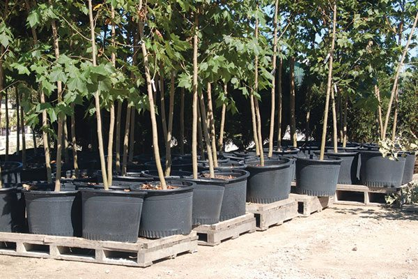 municipal services johnson's nursery grow agreements tree installation container grown madison