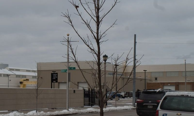 tree installations for municipalities mass planting road urban tree ftimg