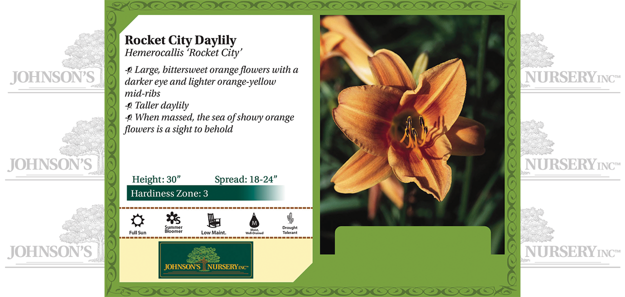 Rocket City Daylily Hemerocallis 'Rocket City' benchcard