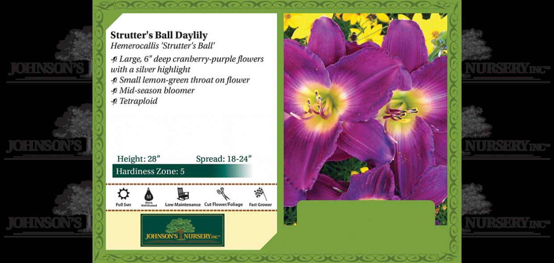 Strutter's Ball Daylily Hemerocallis 'Strutter's Ball' benchcard