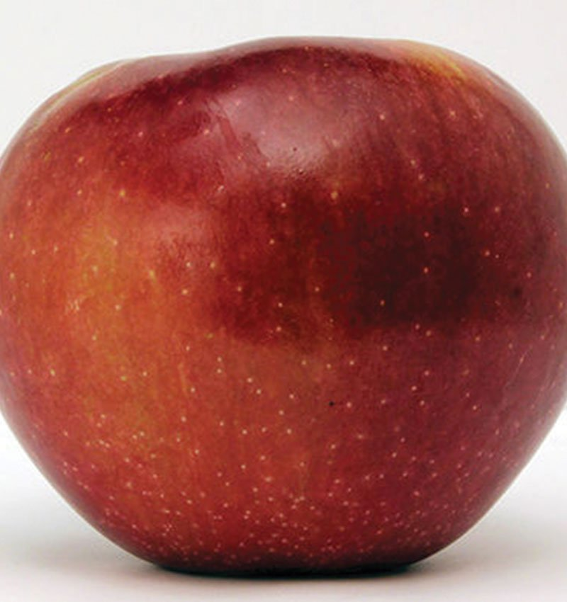 connell red apple malus domestica ftimg