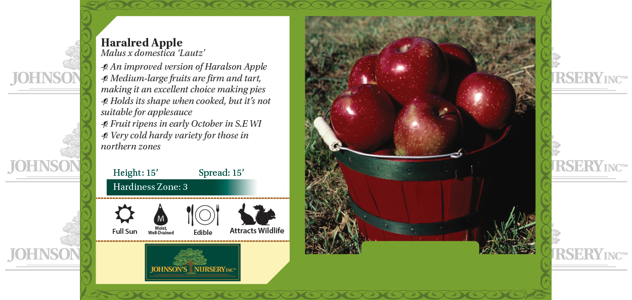 Haralred apple Malus x domestica 'Lautz' benchcard
