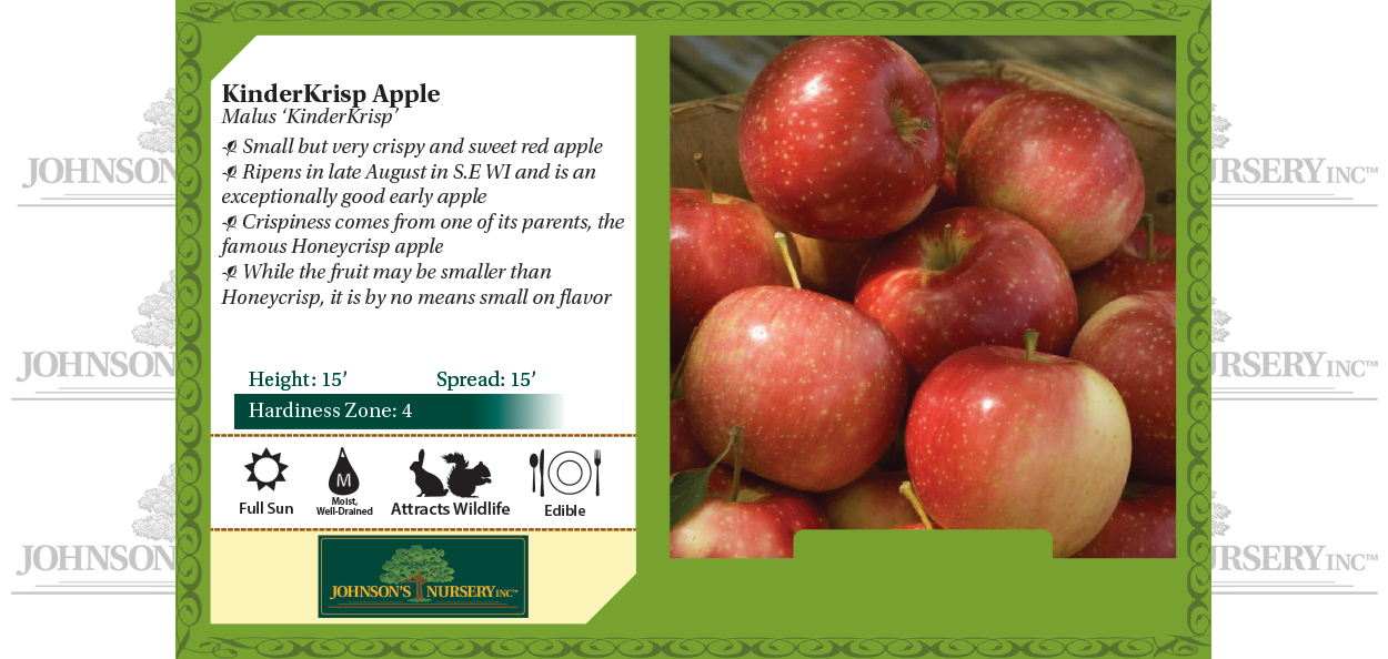 KinderKrisp apple Malus 'Kinderkrisp' benchcard