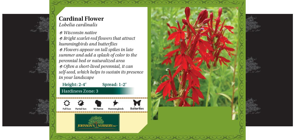 Cardinal Flower Lobelia cardinalis benchcard