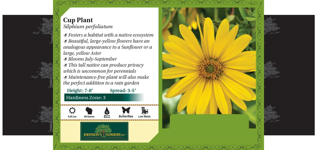 Cup Plant Silphium perfoliatum benchcard