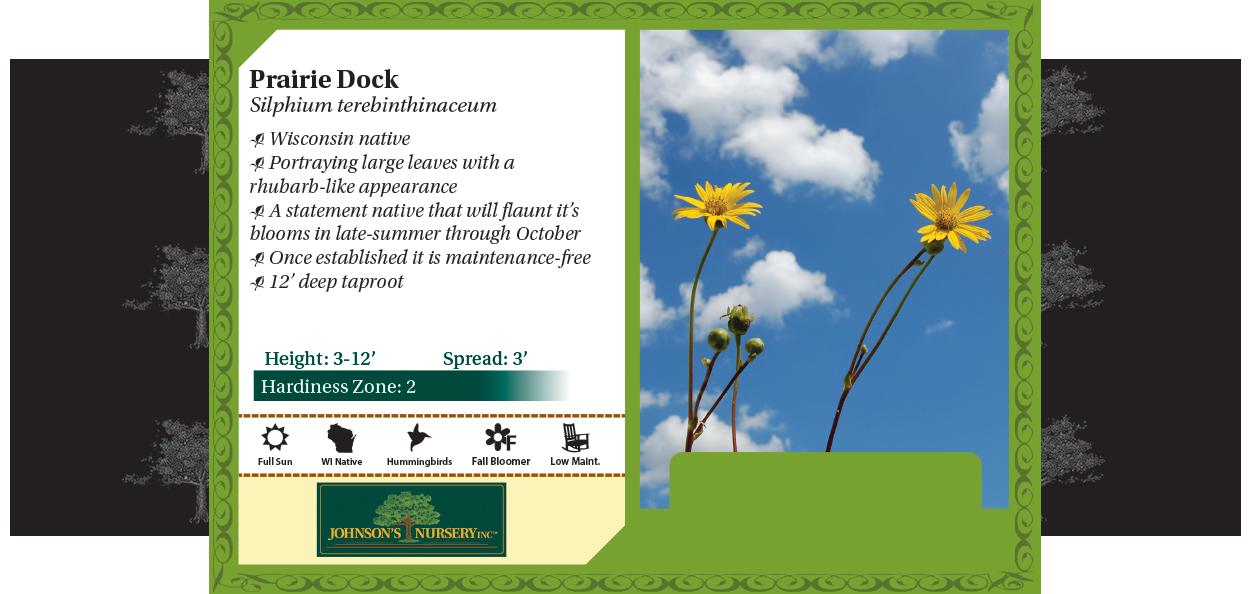 Prairie Dock Silphium terebinthinaceum benchcard