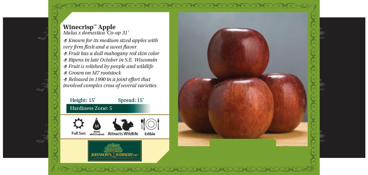 winecrisp apple malus domestica coop 31 benchcard
