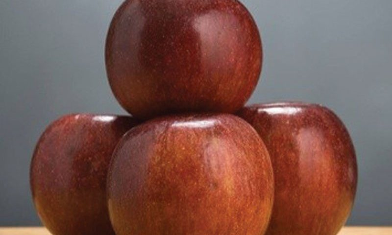winecrisp apple malus domestica coop 31 ftimg