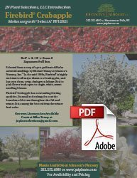 firebird crabapple malus sargentii select a info flyer