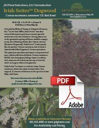irish setter dogwood cornus racemosa amomum jn red stem info flyer