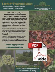 lacette fragrant sumac rhus aromatica fine textured compact select a info flyer img