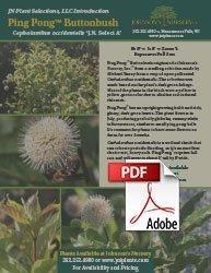 ping pong buttonbush cephalanthus occidentalis select a dark green info flyer img
