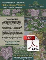 pink-a-licious fritsch spiraea fritschiana jn select a info flyer img