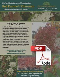 red feather arrowwood viburnum dentatum jn select info flyer img