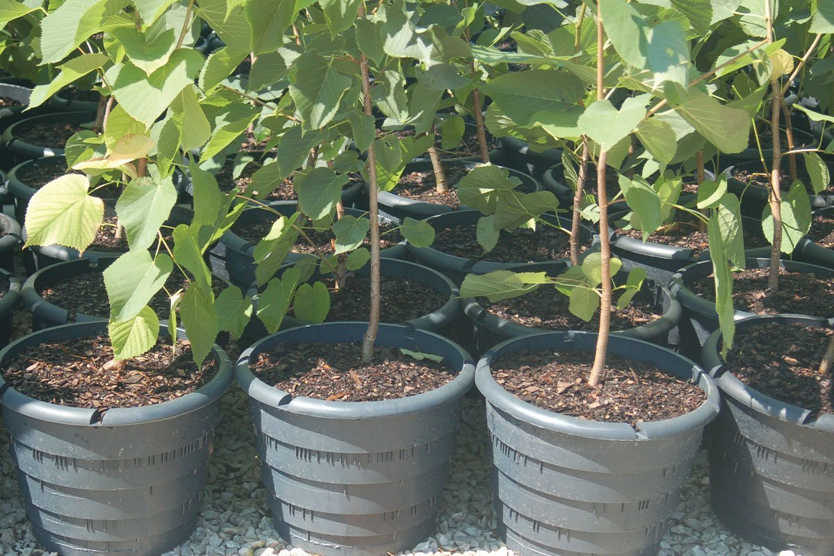 rootmaker container range at johnson's nursery for native plants with fibrous roots