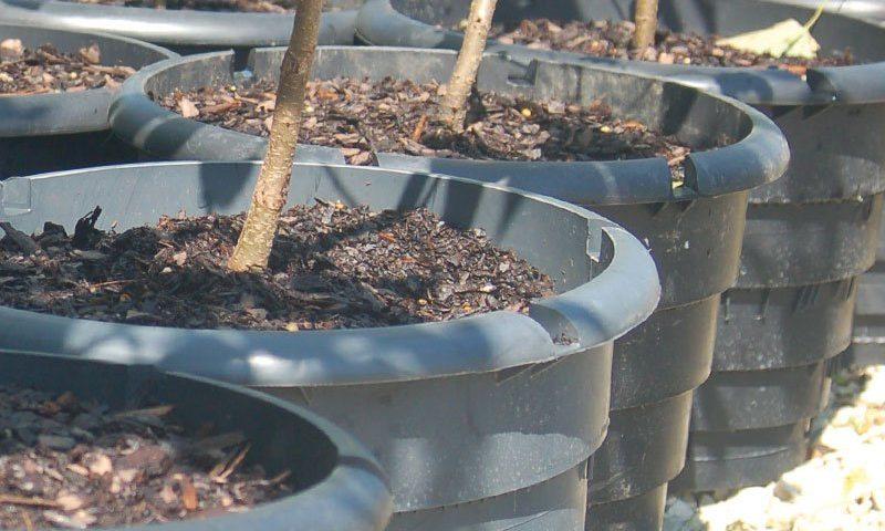 rootmaker container range at johnson's nursery ftimg