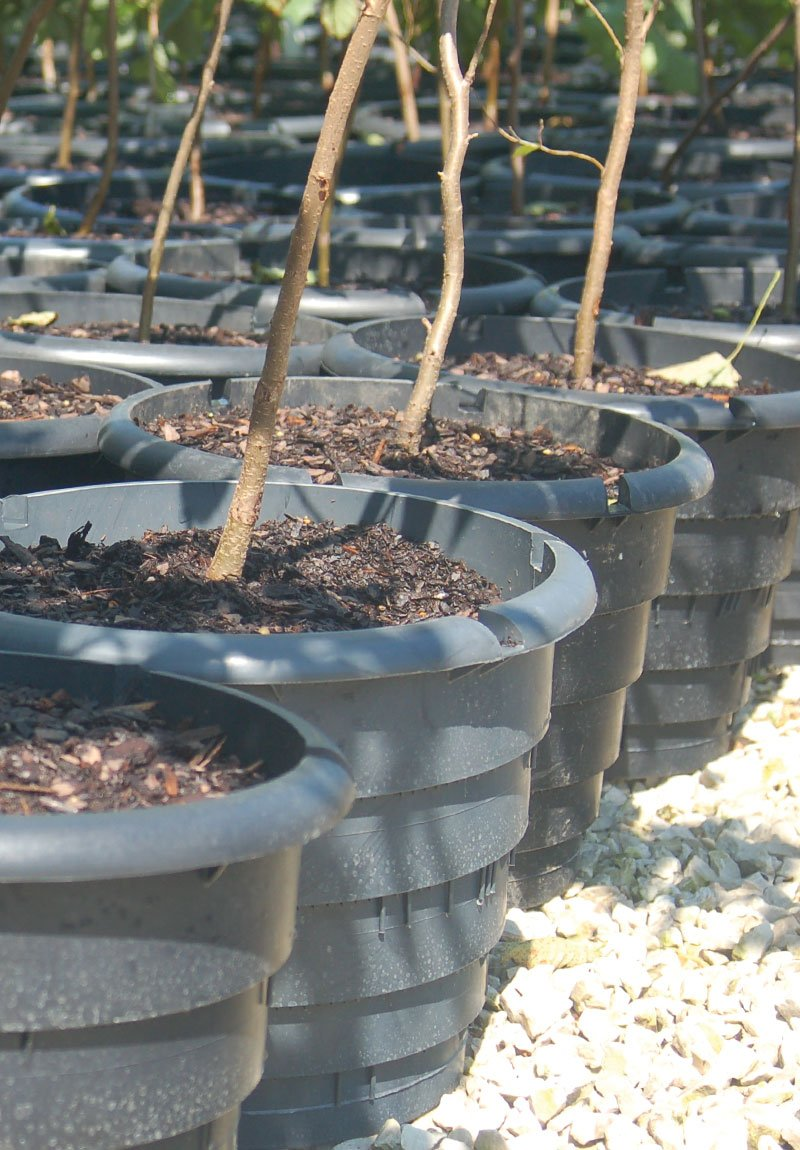rootmaker container range at johnson's nursery ftimg