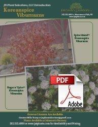spice island koreanspice viburnum carlesii jn select a info flyer img