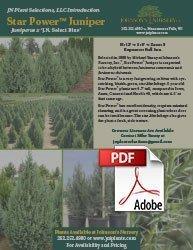 star power juniper juniperus jn select blue info flyer img