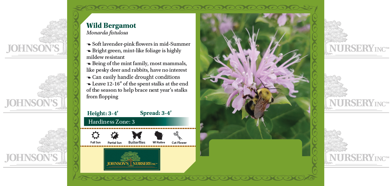 wild bergamot monarda fistulosa wisconsin native perennial flowers for pollinators benchcard