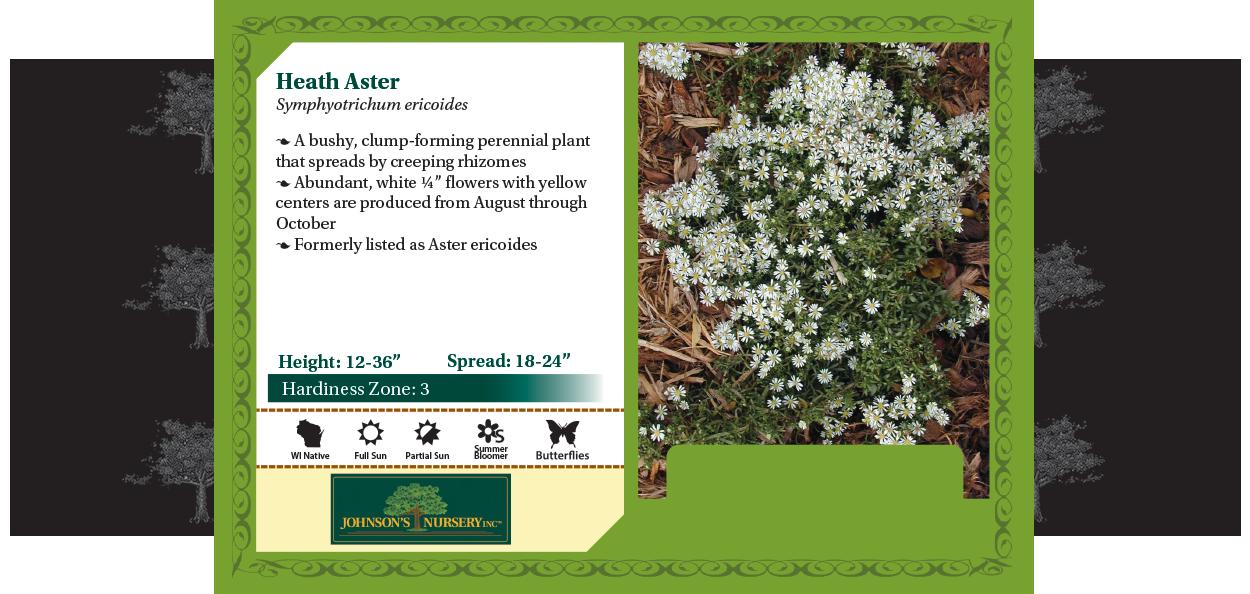 Heath aster, white heath aster, white prairie aster, wreath aster symphyotrichum ericoides benchcard